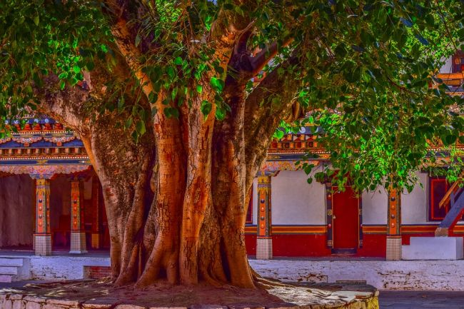 banyan tree images hd download