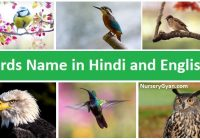 Full list of Birds name in Hindi and English