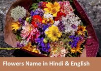 Flowers name in Hindi - full list