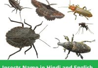 Insects Name in Hindi and English with full list
