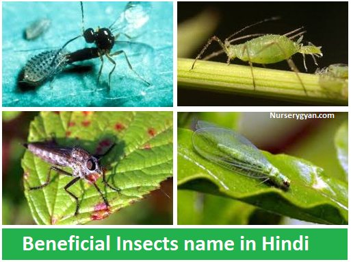 Beneficial insects name in Hindi