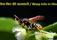 Tataiya or Wasp Insect