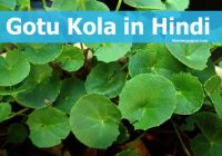 Gotu Kola information in Hindi