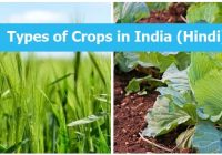 Types of Crops in India (Hindi)