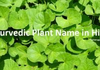 Ayurvedic Plant Name in Hindi